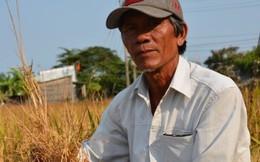 Nông dân Tiền Giang thất mùa nặng vì hạn