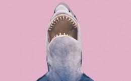 Nói chuyện với người nổi tiếng giống như… bơi cùng cá mập