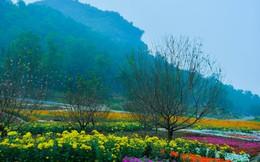 Hẹn hò 'check-in' với Lễ hội hoa Xuân Bái Đính