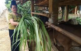 Nguồn vốn chính sách giúp bà con dân tộc, miền núi Lào Cai thoát nghèo bền vững
