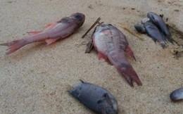 Cấm dùng cá chết làm thực phẩm dưới mọi hình thức