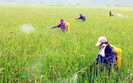 Vi phạm trong bảo vệ thực vật, phạt tới 100 triệu đồng