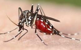 Phát hiện một loại hoạt chất có tác dụng kháng virus Zika