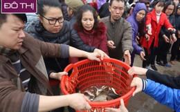 10 ngàn người tham gia phóng sinh hơn 5 tấn cá