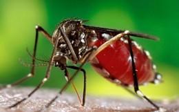 Virus gây bệnh đầu nhỏ đang lan nhanh