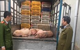 Bắt xe chở gần 500kg thịt lợn nhiễm tả lợn châu Phi đi tiêu thụ