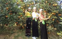 Ứng dụng công nghệ sản xuất cam hữu cơ bảo vệ môi trường