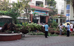 Bộ trưởng GD&ĐT đề nghị đảm bảo an toàn trong nhà trường sau vụ cây đổ đè chết học sinh