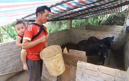 Những nỗ lực khó tin của đôi vợ chồng người Khơ Mú, thoát nghèo từ đôi lợn giống