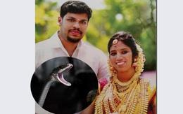 Gã chồng thả rắn độc sát hại vợ đang ngủ để chiếm đoạt của hồi môn