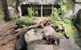 Thảo Cầm Viên Sài Gòn kêu gọi cộng đồng hỗ trợ
