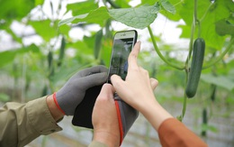 Nông sản tấp nập lên sàn online mùa dịch bệnh
