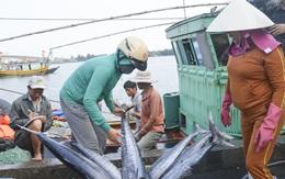 Chấm dứt khai thác hải sản trái phép ở vùng biển nước ngoài