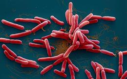 Thấy khuẩn whitmore trong mẫu đất tại nhà có 3 anh em tử vong