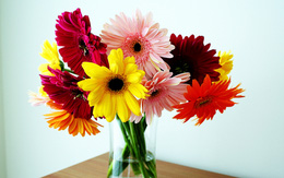 Giữ cho bình hoa tươi suốt Tết với nguyên liệu quen thuộc trong bếp