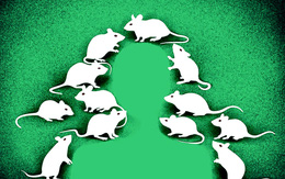 Những điều thú vị chúng ta ít biết về loài chuột
