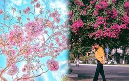 """3 mùa hoa của Sài Gòn đẹp nao lòng các tín đồ """"sống ảo"""""""