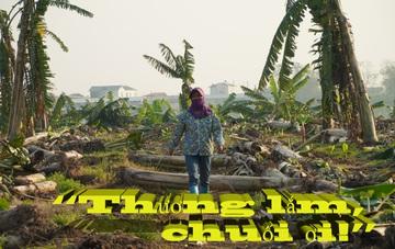 """Hứng chịu """"thảm họa kép"""", hàng trăm hộ trồng chuối ở Hưng Yên lâm cảnh bế tắc"""