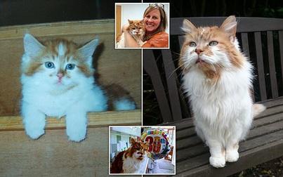 Mèo già nhất thế giới qua đời ở tuổi 31