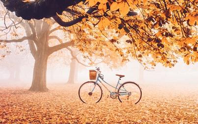 Mùa thu và những ngày tràn nỗi nhớ