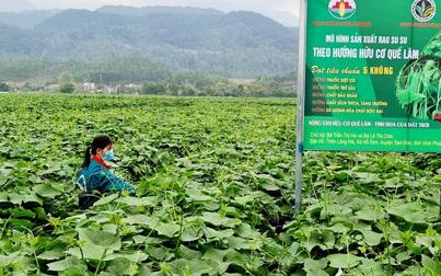 Nông nghiệp hữu cơ giúp nông dân phát triển kinh tế bền vững